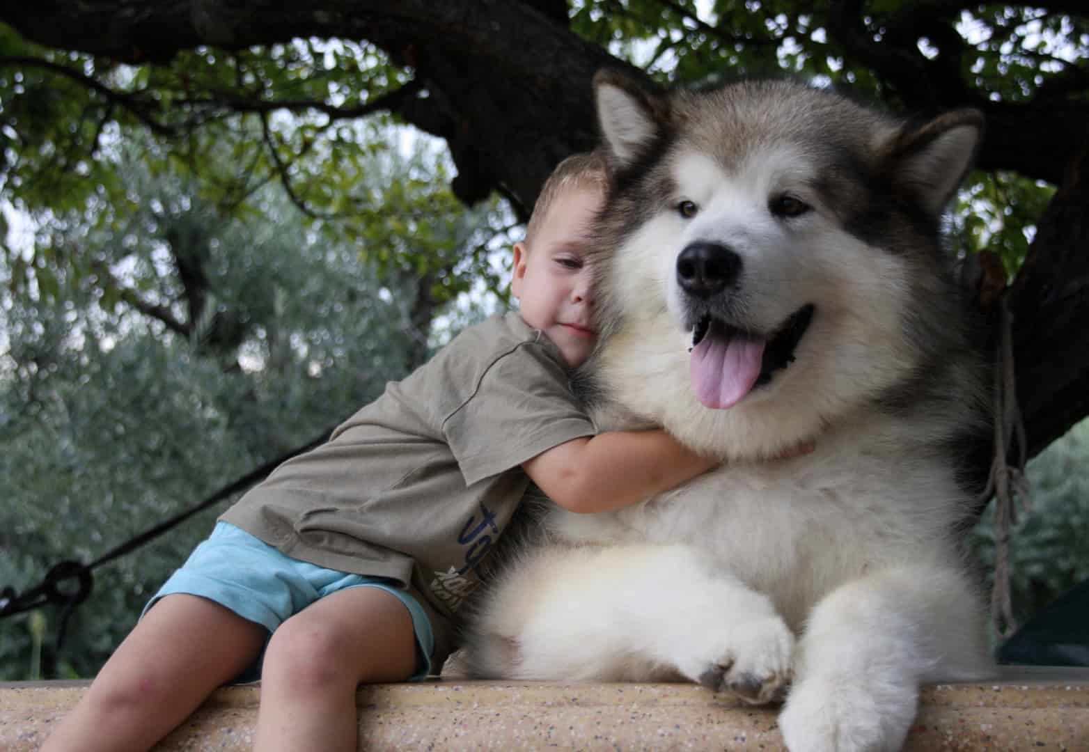 Best Family Movies With Dogs