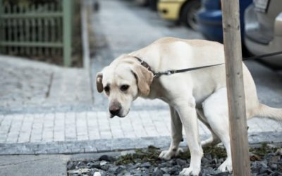 Dog Waste Solutions for Homeowners' Associations