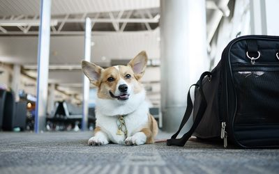 Pet Waste Solutions for Airports